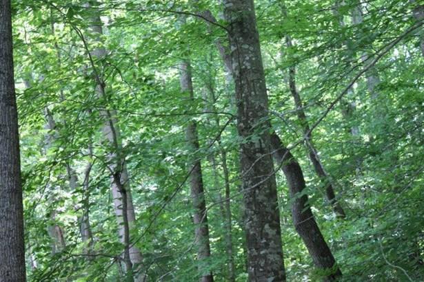 Land/Lots - Ebony, VA (photo 3)