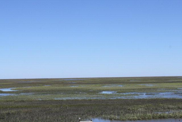 Land - Machipongo, VA (photo 5)