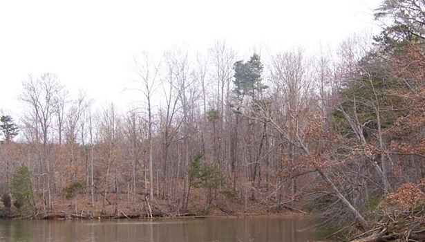 Land (Acreage), Lots/Land/Farm - Union Hall, VA (photo 4)