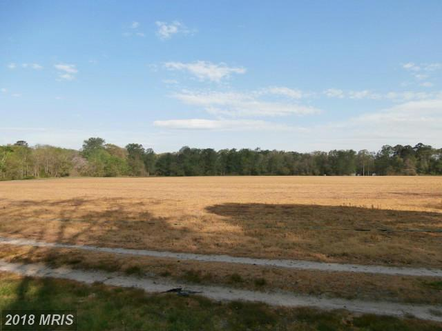 Lot-Land - PRESTON, MD (photo 4)