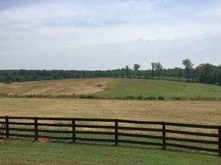 Residential, Commercfial/Industrial, Farmland, Horse Farm, Timber, Modular/Manuf - Lots/Land/Farm (photo 4)