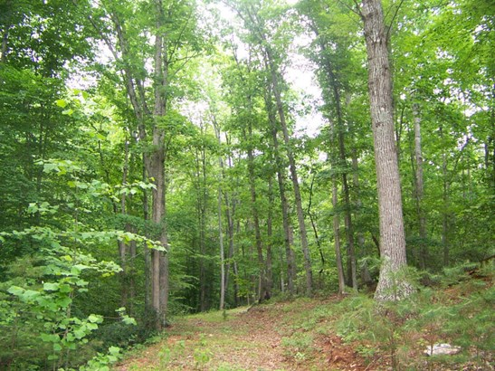 Land (Acreage), Lots/Land/Farm - Lynch Station, VA (photo 4)