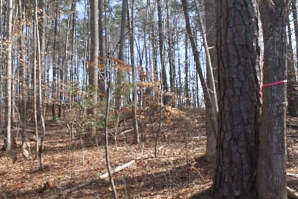 Land/Lots - Ebony, VA (photo 2)