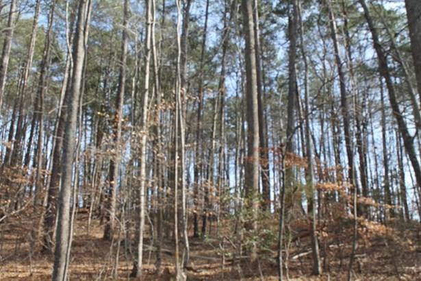 Land/Lots - Ebony, VA (photo 4)