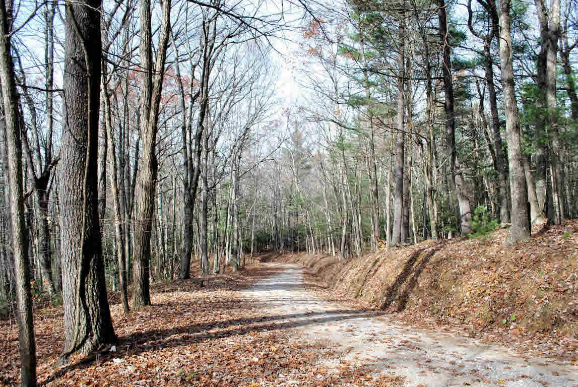 Land - Check, VA (photo 3)