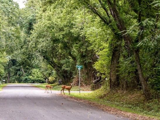 Land - Machipongo, VA (photo 3)