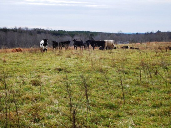 Lots/Land/Farm, Farmland, Orchard, Horse Farm, Beef Cattle - Nathalie, VA (photo 1)