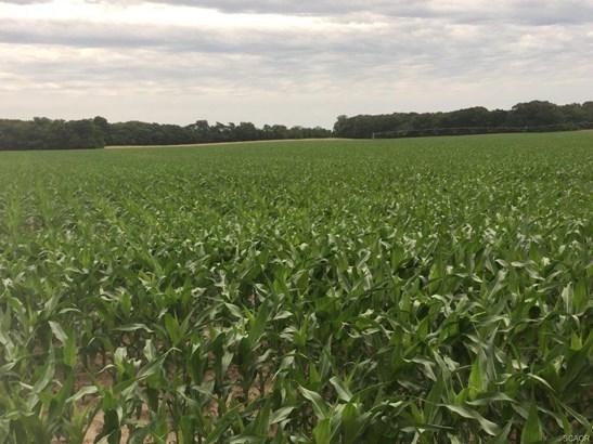 Farms - Laurel, DE (photo 2)