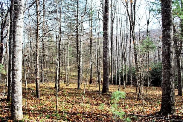 Land (Acreage), Lots/Land/Farm - Floyd, VA (photo 2)