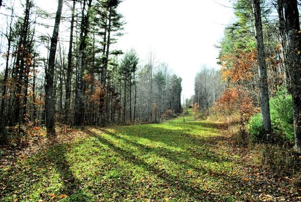 Land (Acreage), Lots/Land/Farm - Floyd, VA (photo 3)