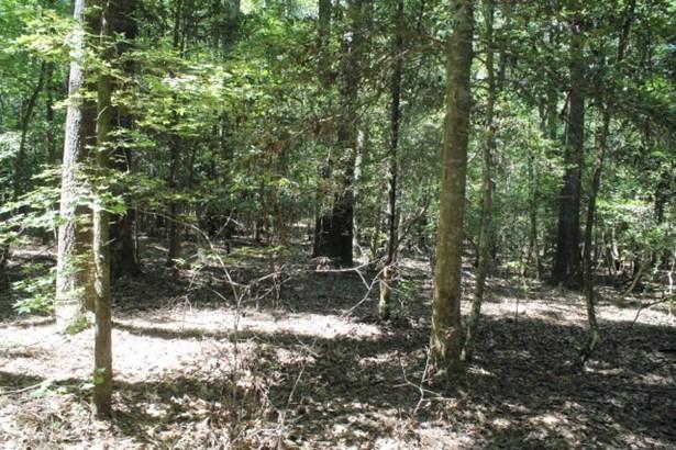 Land/Lots - Boydton, VA (photo 5)
