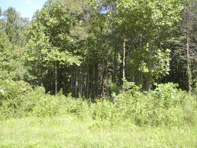 Lot, Lots/Land/Farm - Pittsville, VA (photo 2)