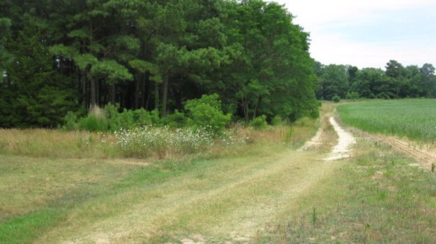 Land - Parksley, VA (photo 5)