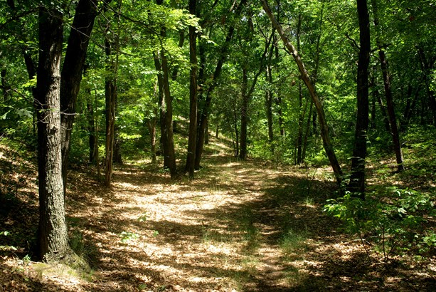 Land (Acreage), Lots/Land/Farm - Hiwassee, VA