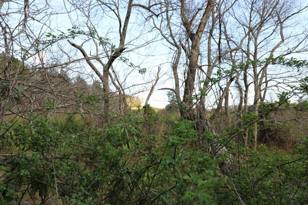 Tree Farm, Lots/Land/Farm - Copper Hill, VA (photo 4)