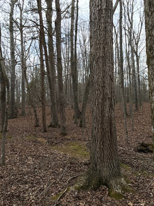 Land/Lots - Keysville, VA (photo 4)