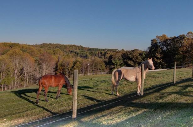 Farm, Horse - Floyd, VA (photo 5)