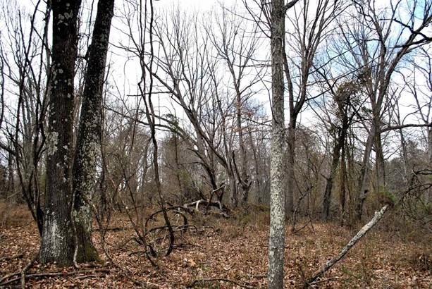 Land - Riner, VA (photo 4)