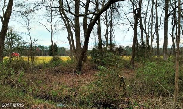 Lot-Land - PITTSVILLE, MD (photo 4)