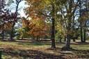 Land - Cape Charles, VA (photo 1)