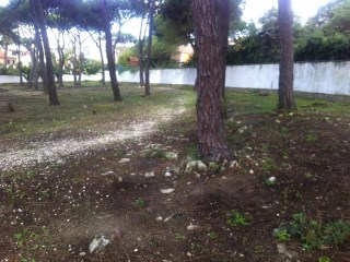 Cascais E Estoril, Cascais - PRT (photo 5)