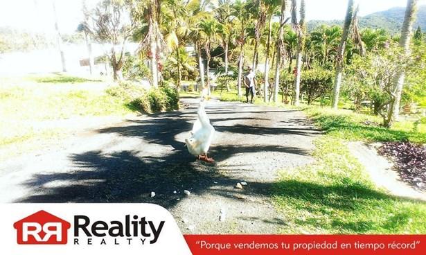 Vicente Alicea , Caguas - PRI (photo 3)