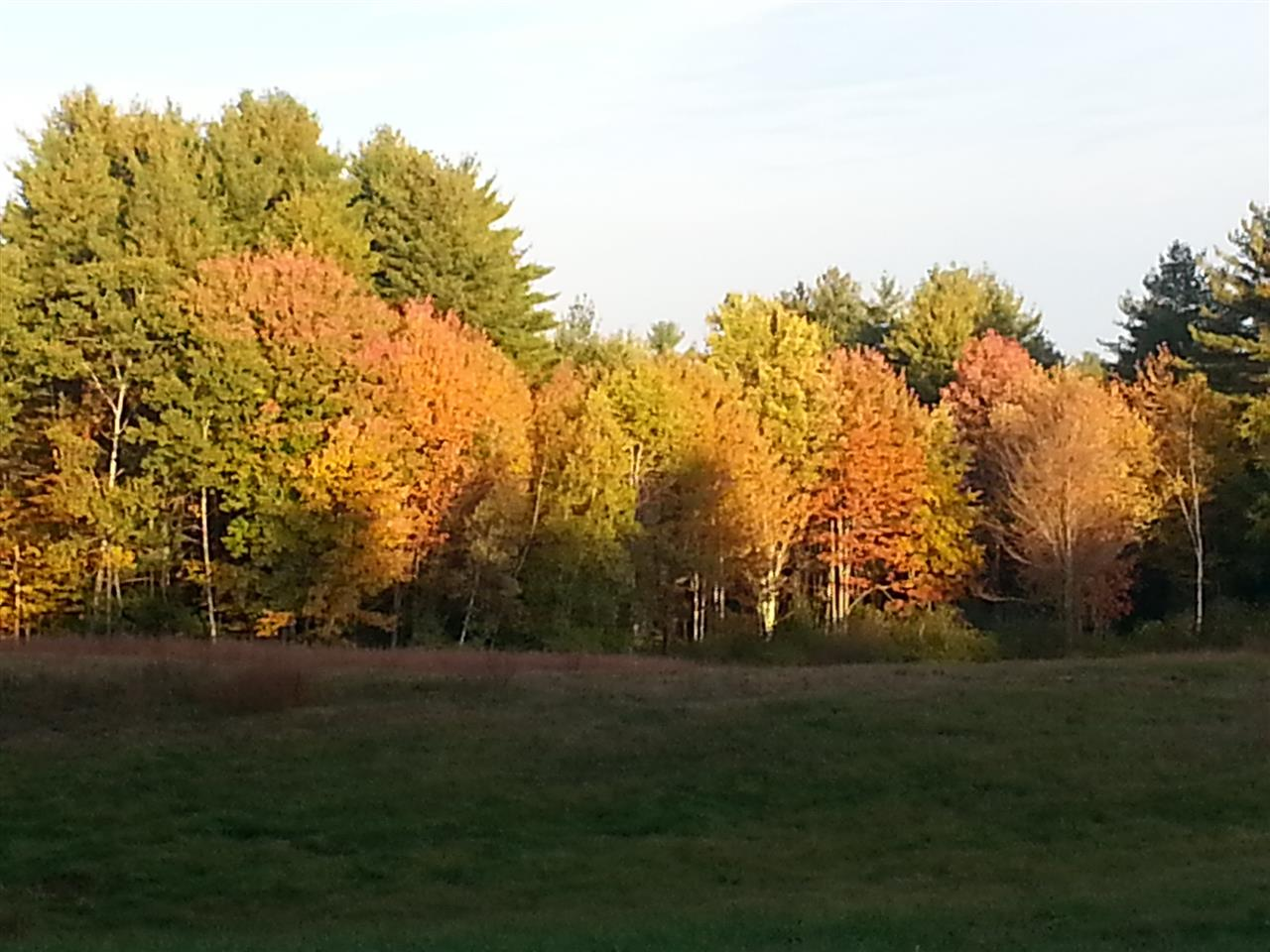 Trees across the field in Newmarket,  New Hampshire, a small town near the NH seacoast