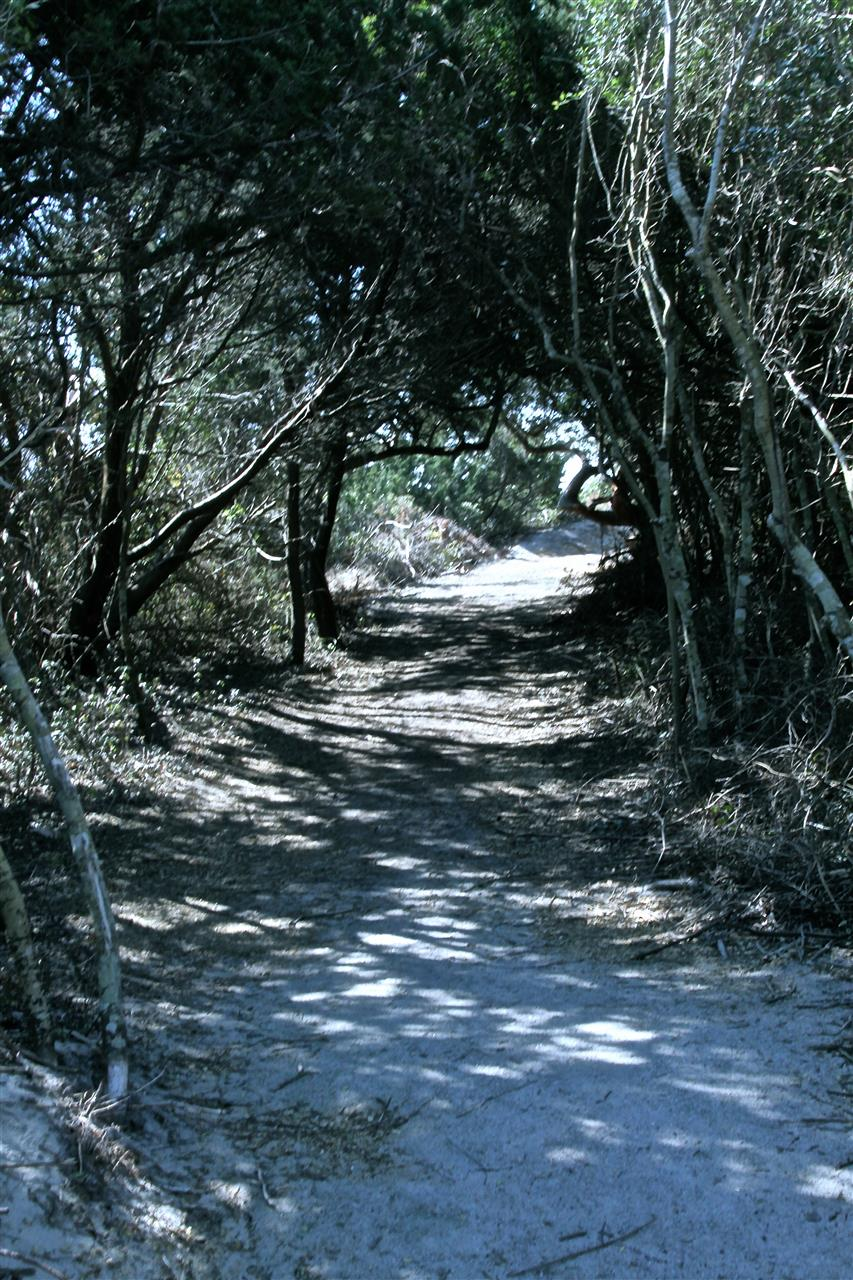 Trees at Fort Macon State Park, Atlantic Beach, NC