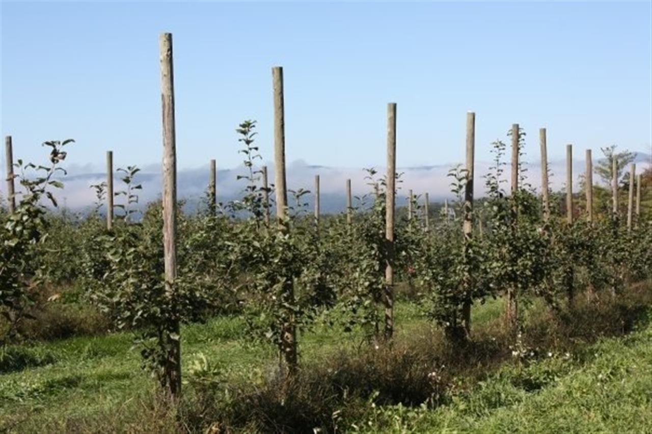Windy Ridge Apple Orchard in Haverhill, New Hampshire.