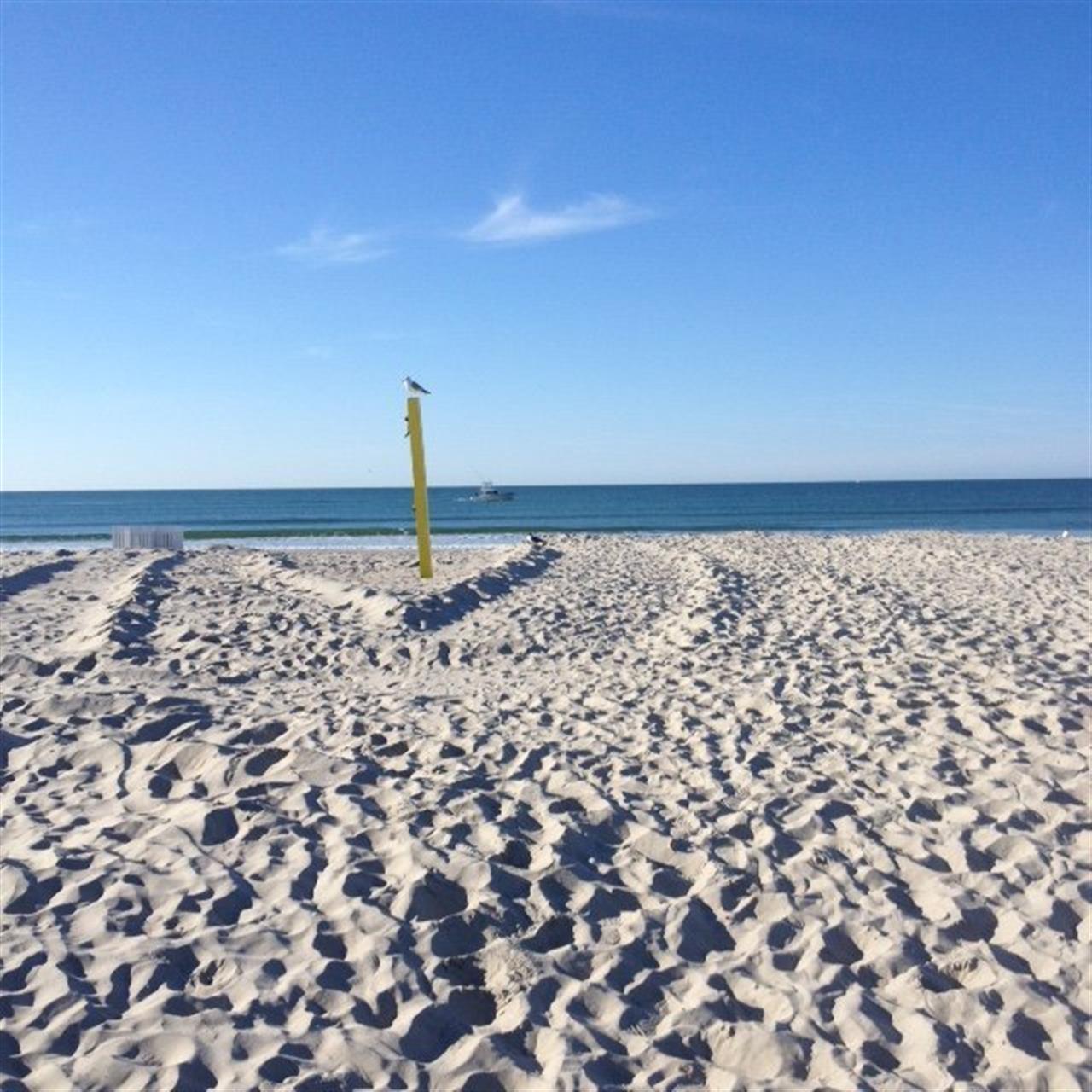 Atlantic Beach, NC seagull