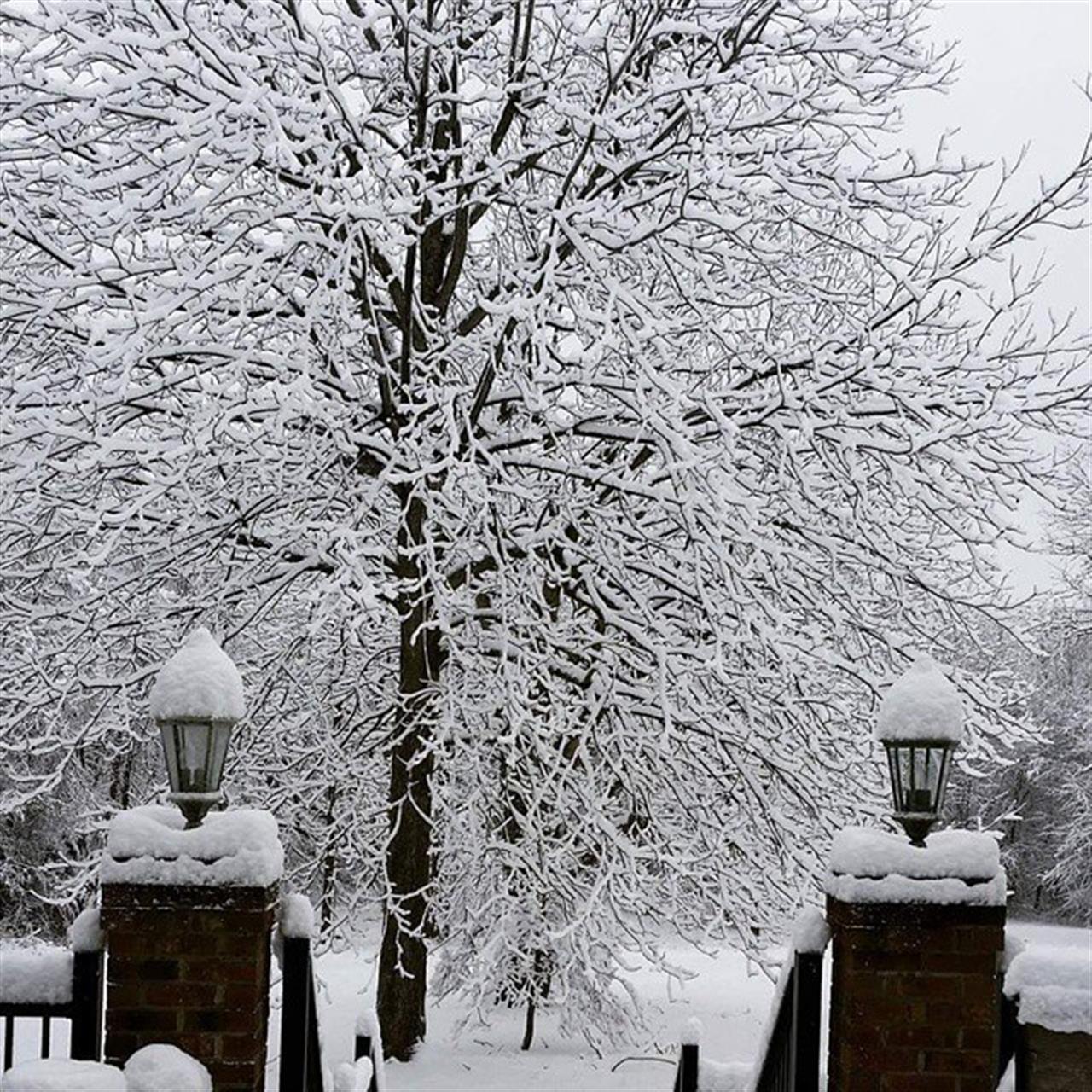 #leadingrelocal #elonnc #winterwonderland