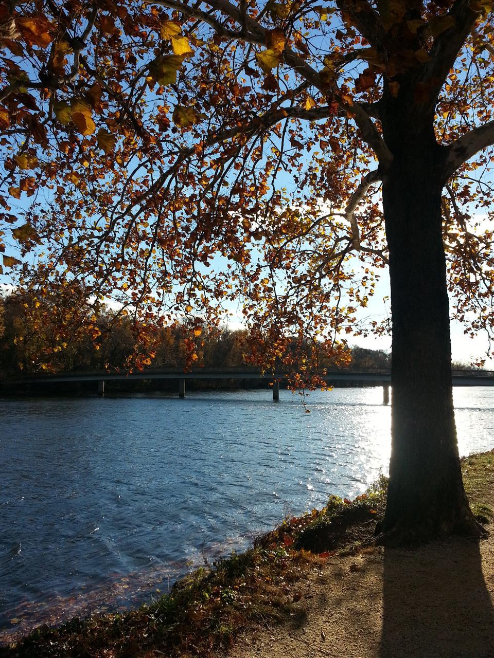 Theodore Roosevelt Island Bridge,  taken from Arlington, VA
