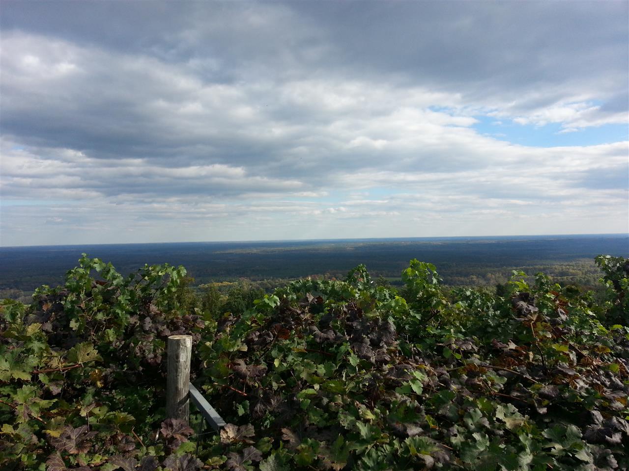Carters Mountain Vineyard, Charlottesville VA