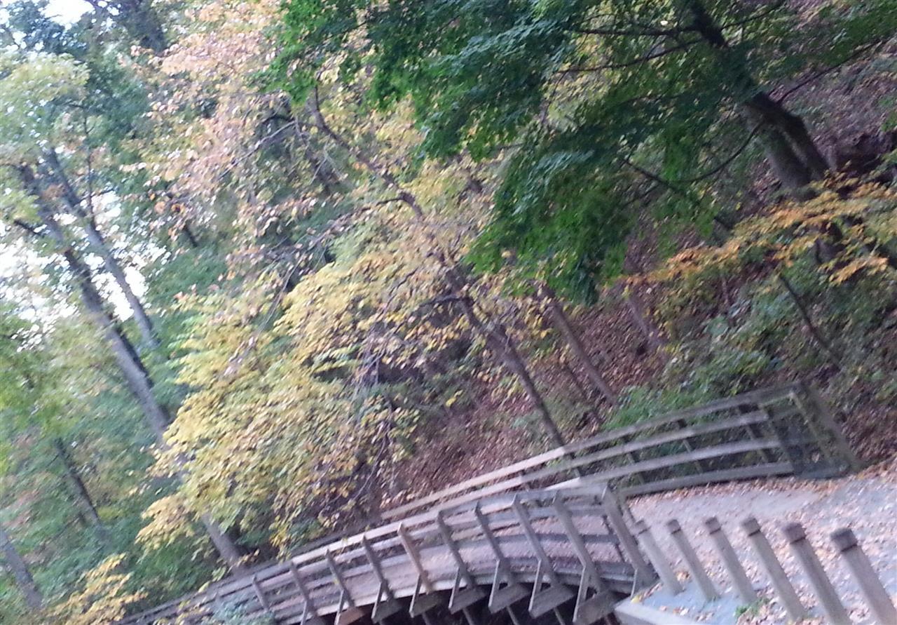 Carters Mountain Walking Trail, Charlottesville VA