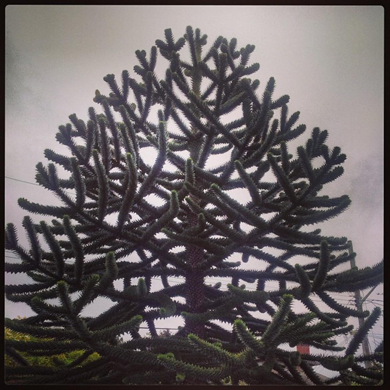 #monkeytree #oakbay #leadingrelocal #realestate