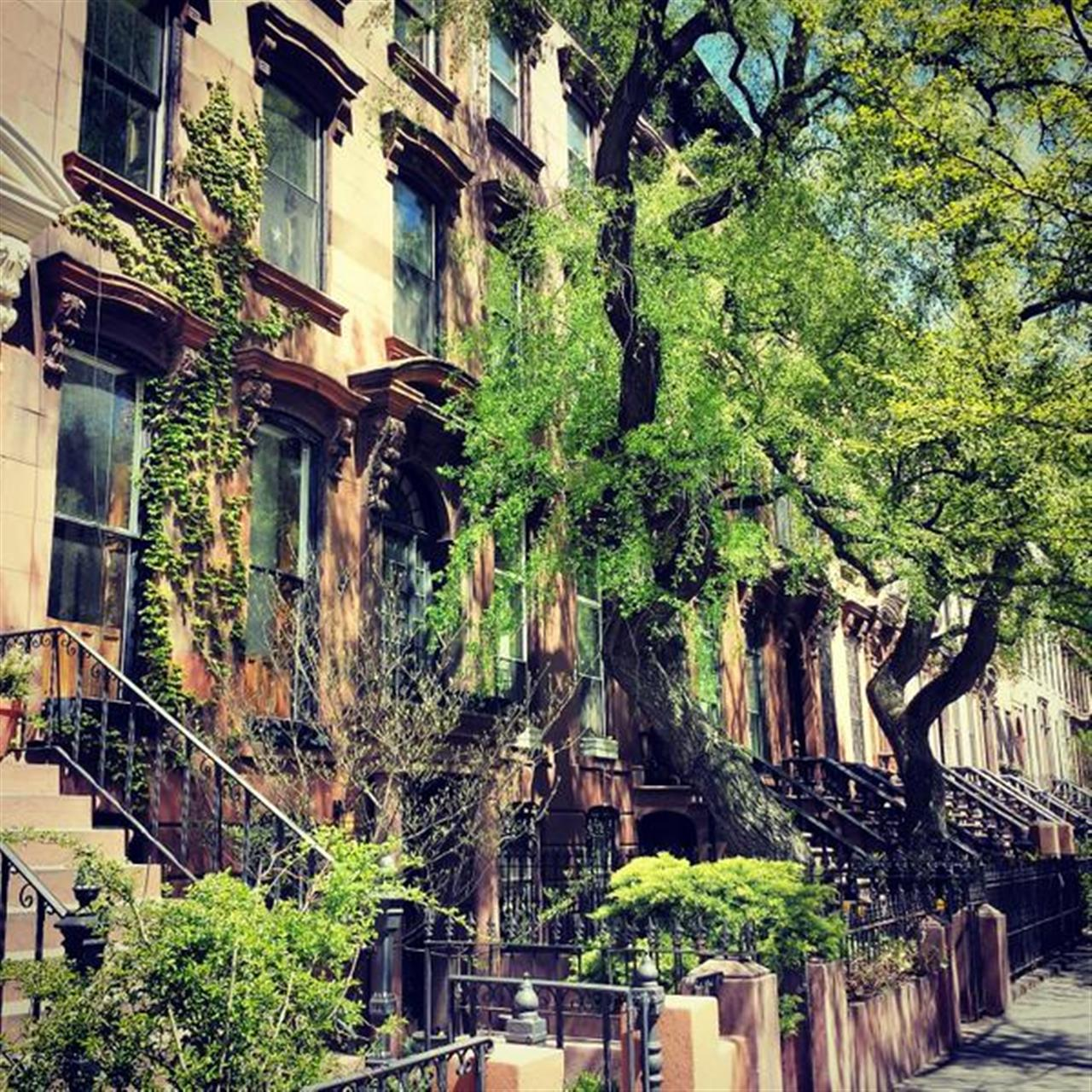 Somehow these trees survive this concrete jungle #nyc #prospectheights #bkoriginal #leadingRElocal