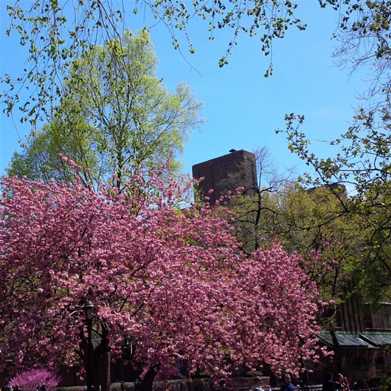 Beaut day #AMNH even the flowers are happy! #ExploreYourHood #realestaterockstar.nyc #LeadingRELocal