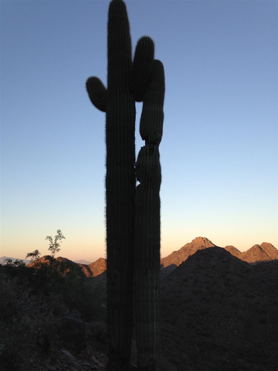 Saguaro Phoenix AZ