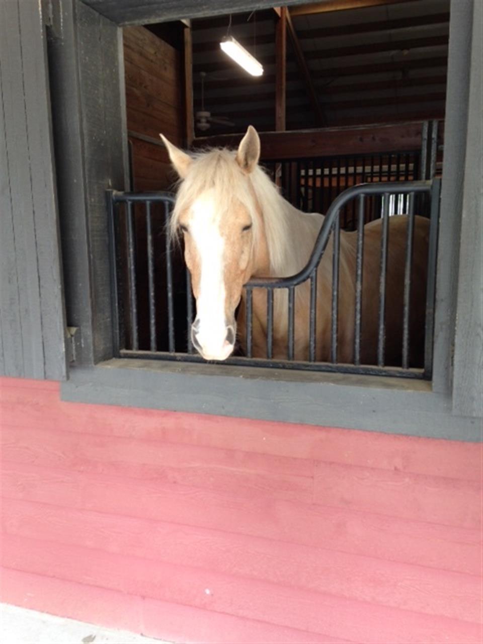 Spring Island, Equestrian Stable, Okatie SC