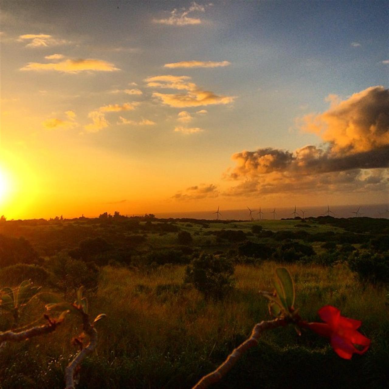 Home on the range! #sunset #derbyfarm #greenacres #hnnsunrise #leadingrelocal