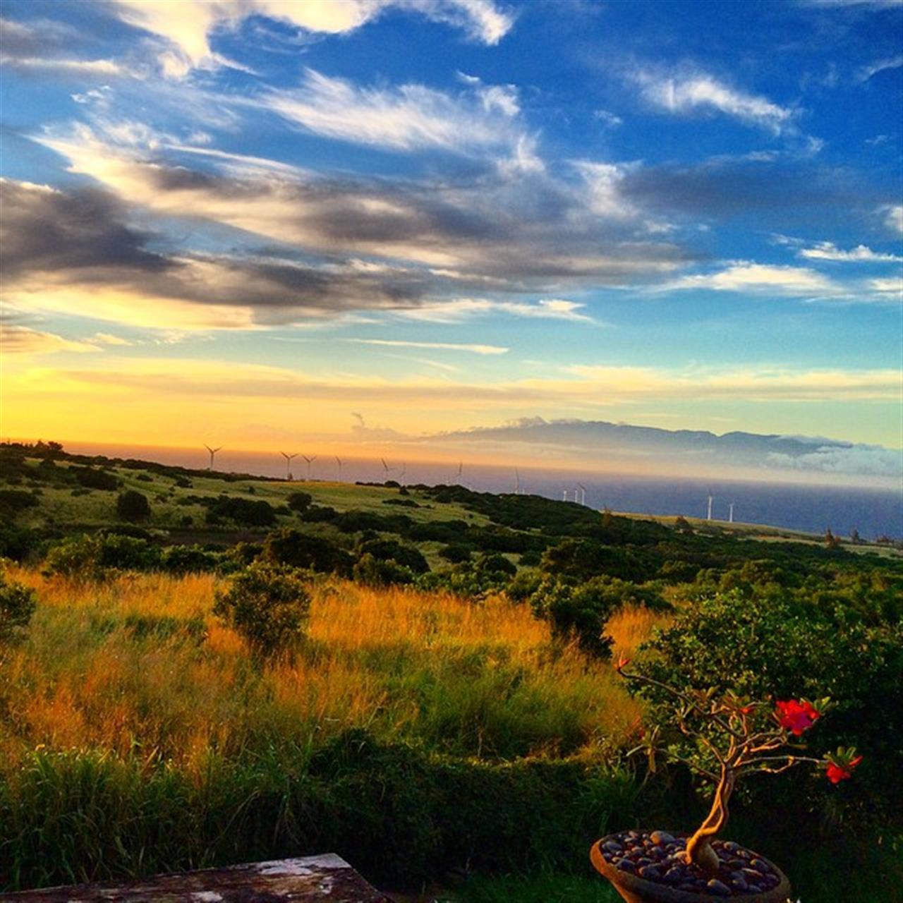 One thing about living on Moku o Keawe Hawai'i Island is that the sunsets never ever disappoint! ?#luckywelivehawaii #derbyfarm #beingbrooke #hawaiilife #365hawaiisunset #hnnsunrise #glimpseofhawaii #leadingRElocal