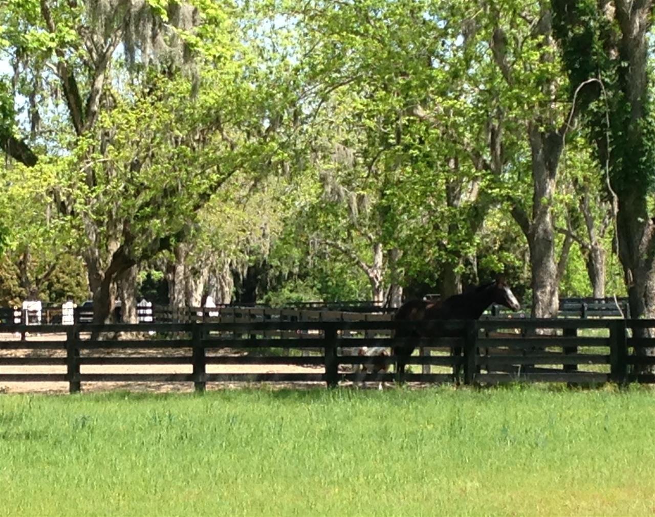 Equestrian center at Moss Creek Hilton Head Island, SC