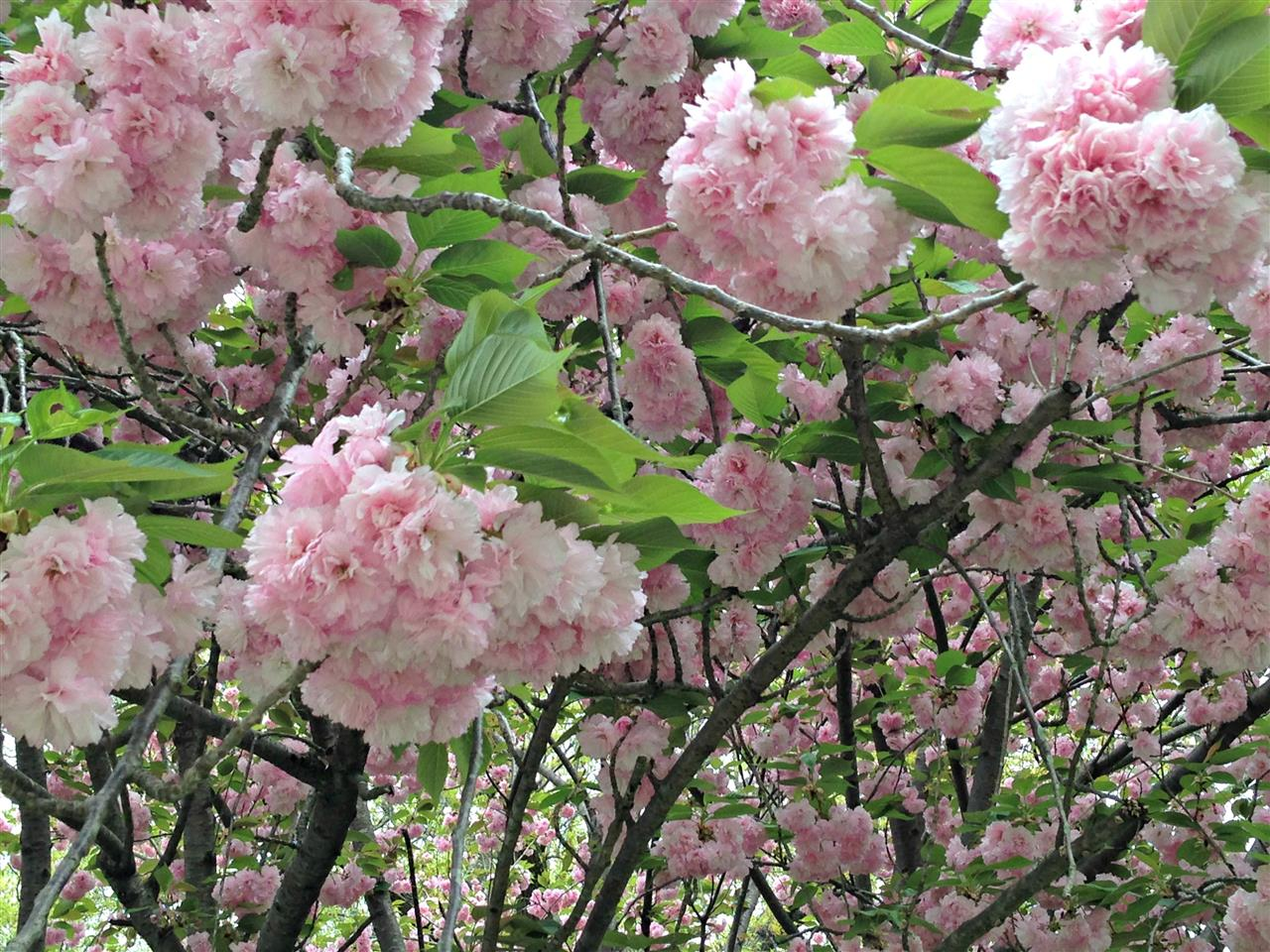 #Reynaldo Garden#Winston-Salem#NC
