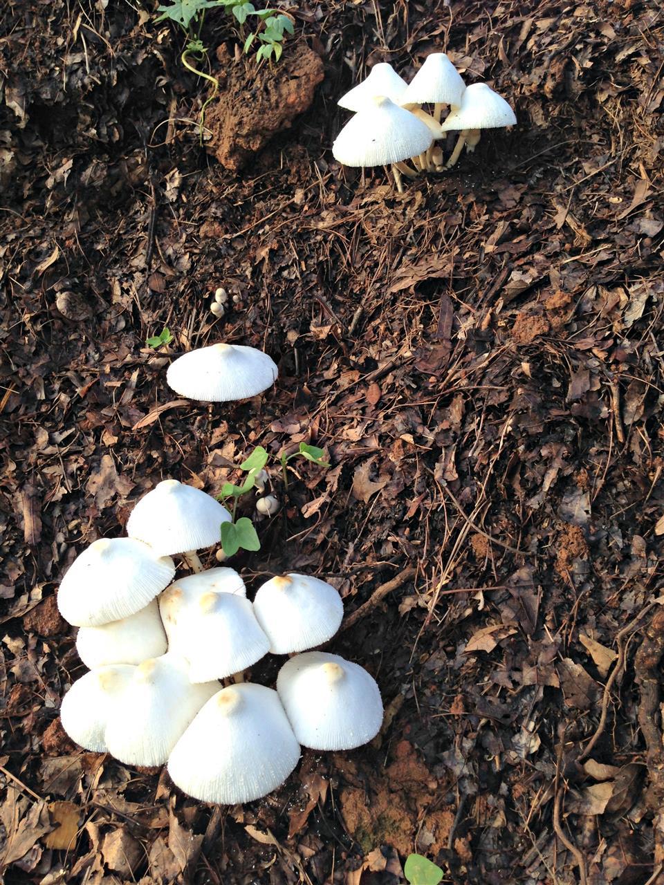 #Mushroom#Winston-Salem#NC
