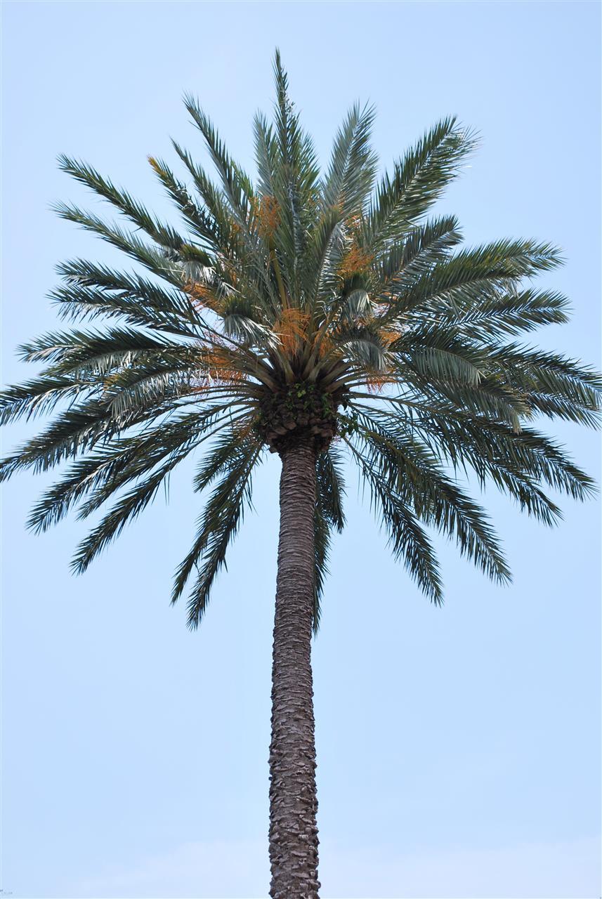 Palm. Tampa, St. Pete, Florida.