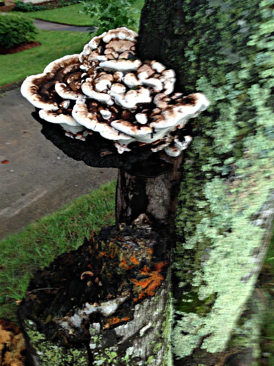 #Nature#Winston-Salem#NC#Nature all over W-S