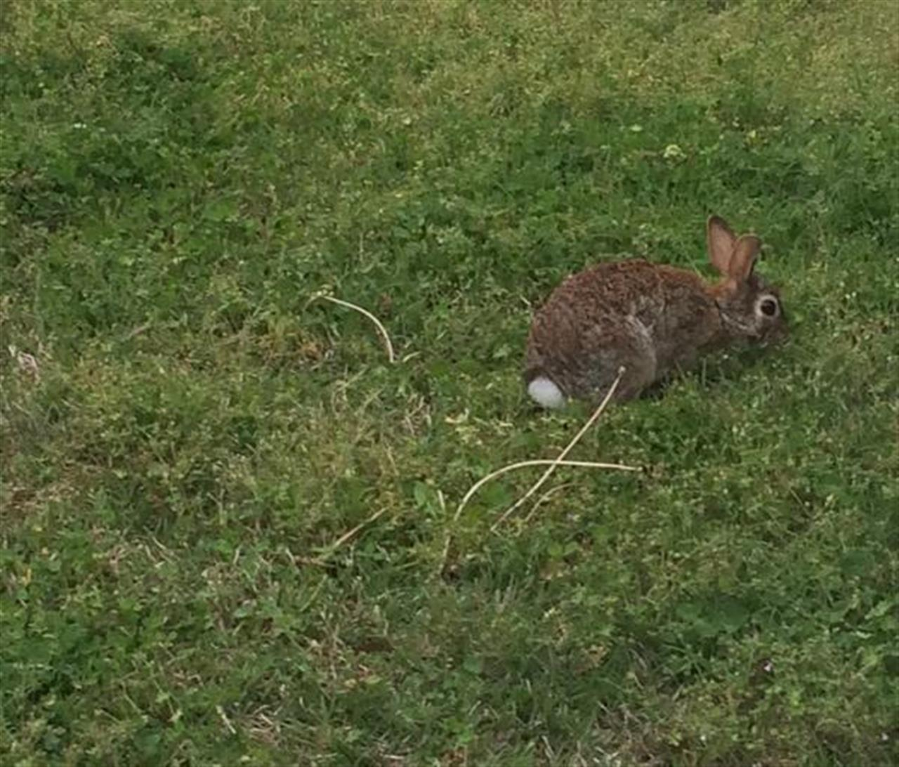 Loving spring in #TheCarolinas! Wild bunnies living in my yard in #Mooresville, #NC. #LeadingRElocal
