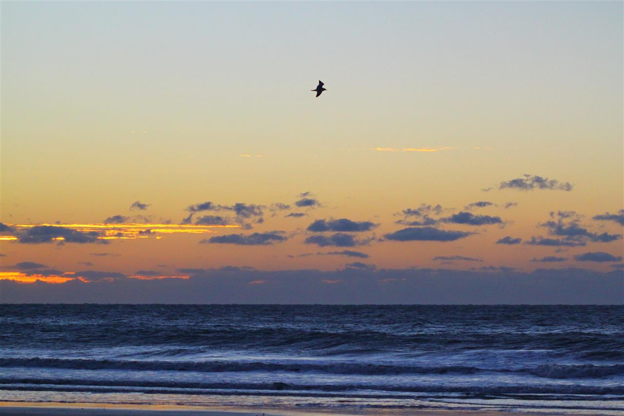 Waking up with the birds on Wilmington Beach, NC
