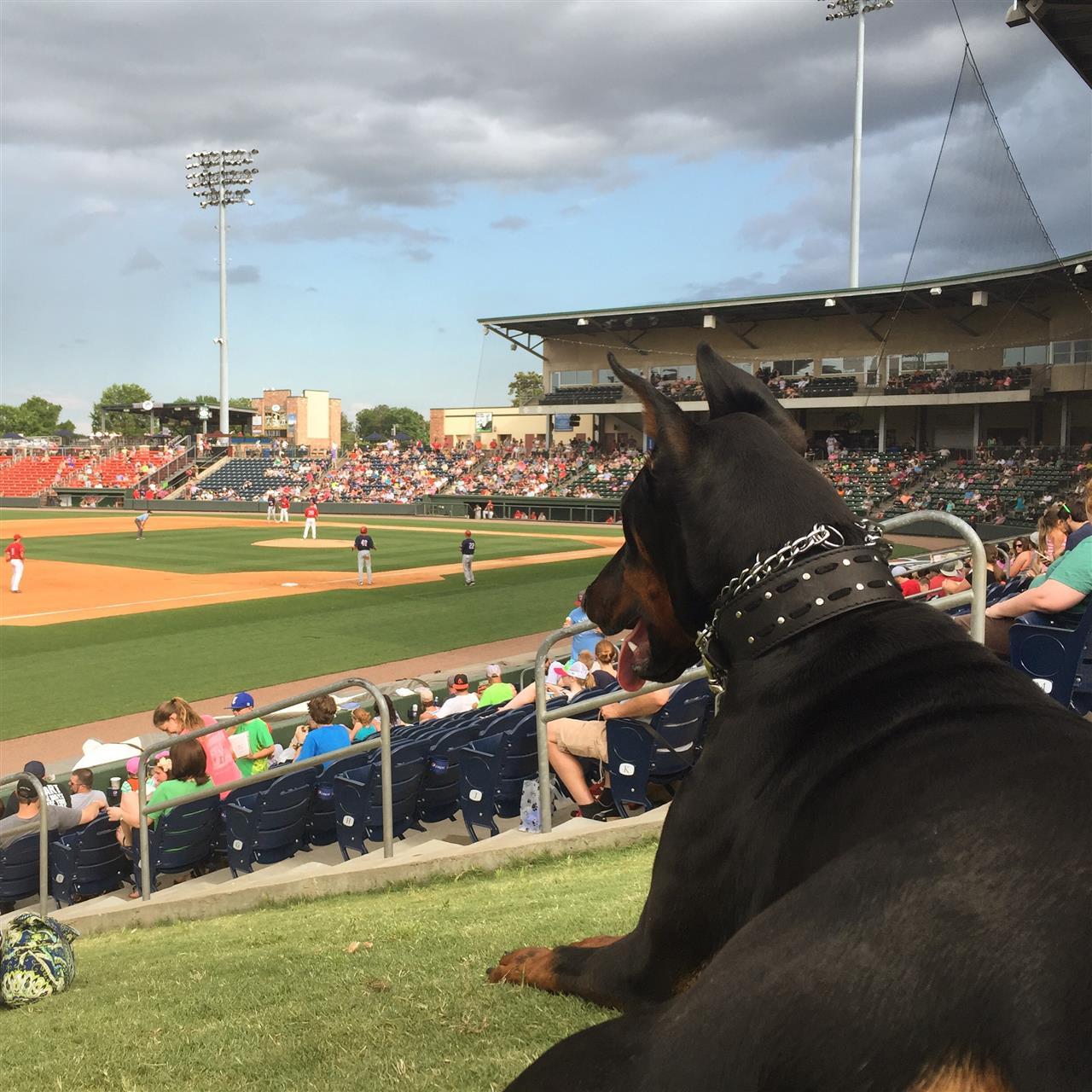 #BarkInThePark at the #GreenvilleDrive baseball game! #Greenville #SouthCarolina #LeadingRELocal #Drive #Baseball