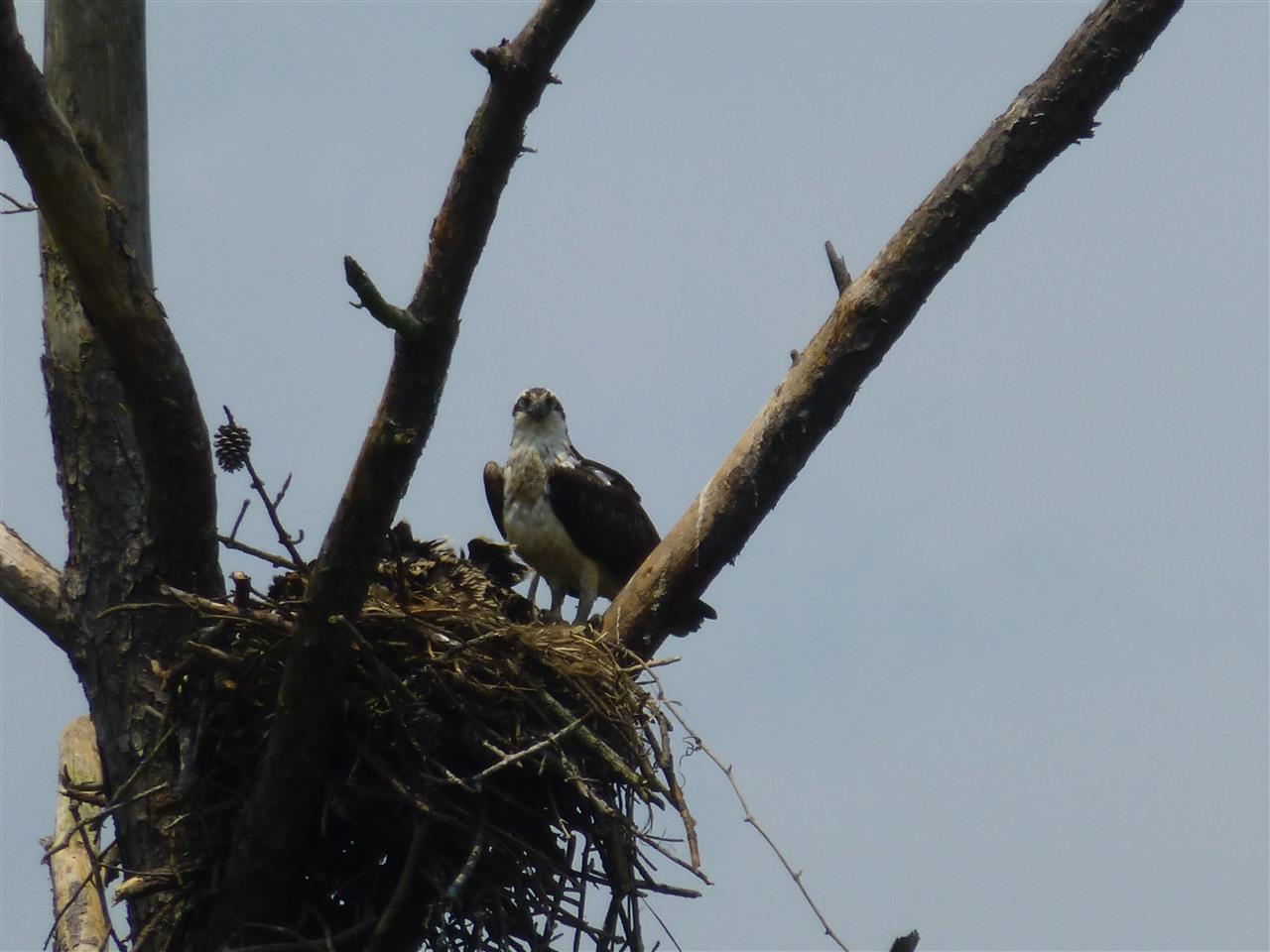Eagles Nest - Bird's Eye view of the Colonial Parkway Williamsburg, VA
